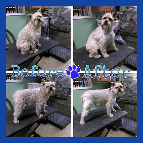 Before & After Dog Grooming from Leader of the Pack Canine Institute
